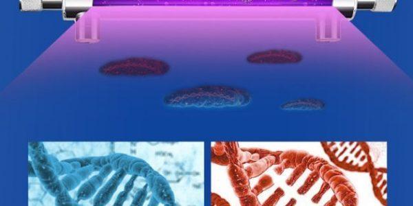 DNA-複製-600x300